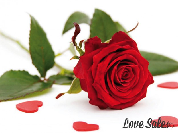The best places to buy flowers for valentines day for Buying roses on valentines day