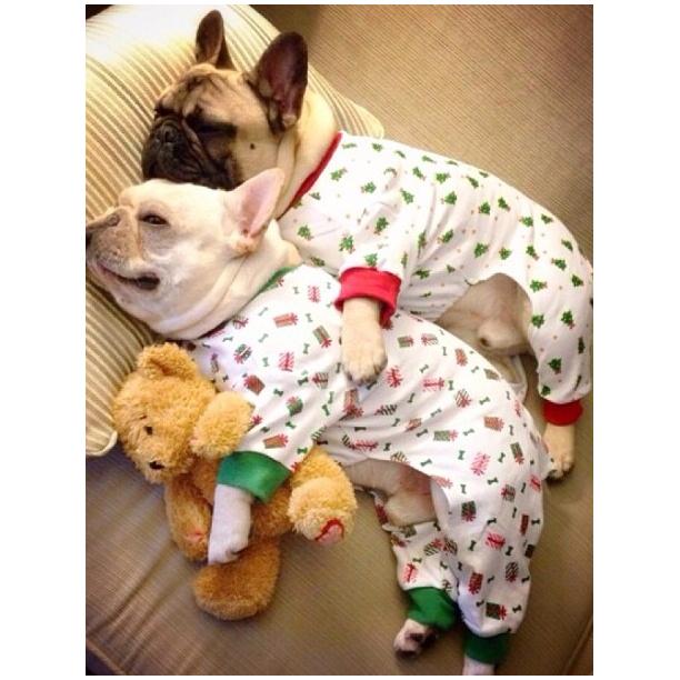 pyjama puppies